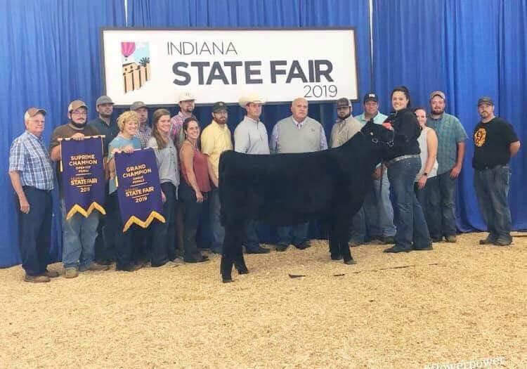 Indiana State Fair Open Show - Brock Farms